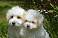 semi-absentee dog grooming - 1