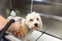 dog grooming business suffolk - 1