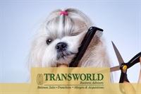 long established dog grooming - 1