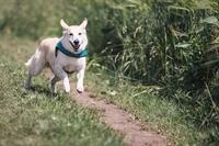 pet daycare boarding training - 1