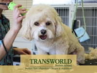 upscale pet grooming business - 1