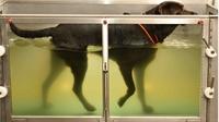 veterinary rehab a lifestyle - 1
