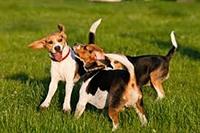 dog daycare business utah - 1