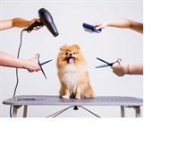 profitable mobile pet grooming - 1