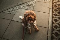 dog walking pet sitting - 1