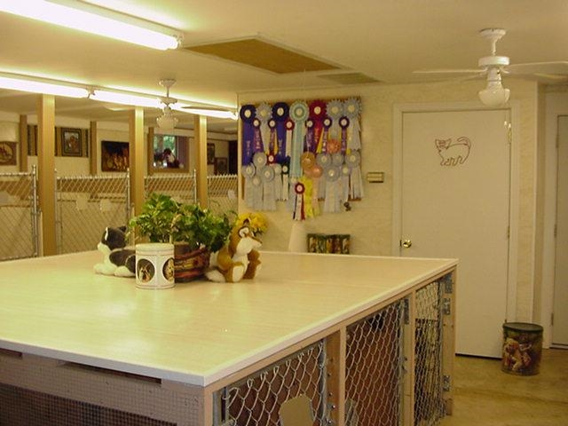 established turnkey pet resort - 4