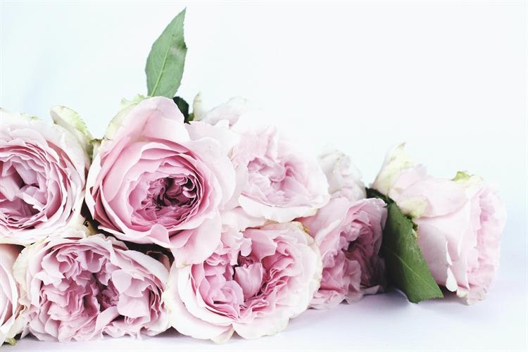 profitable award winning floral - 6