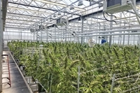 marijuana grow retail operation - 1