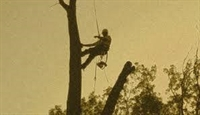 tree service business wayne - 3