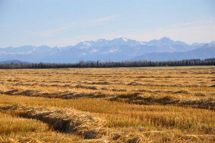 grain seed hay farm - 5