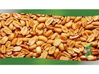 online gourmet peanut processor - 1
