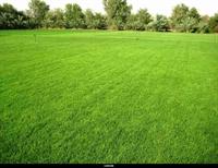 established lawn care business - 1