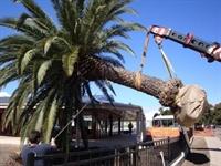 tree service territories - 1