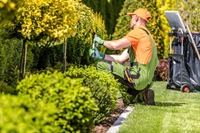 lawn landscaping - 1