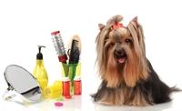 dog grooming - 1