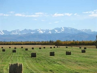 grain seed hay farm - 1