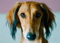 turn key dog grooming - 1