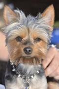 dog grooming suffolk county - 1