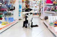 highly profitable pet supply - 1