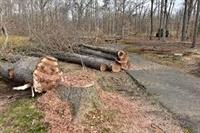 tree service business nassau - 3