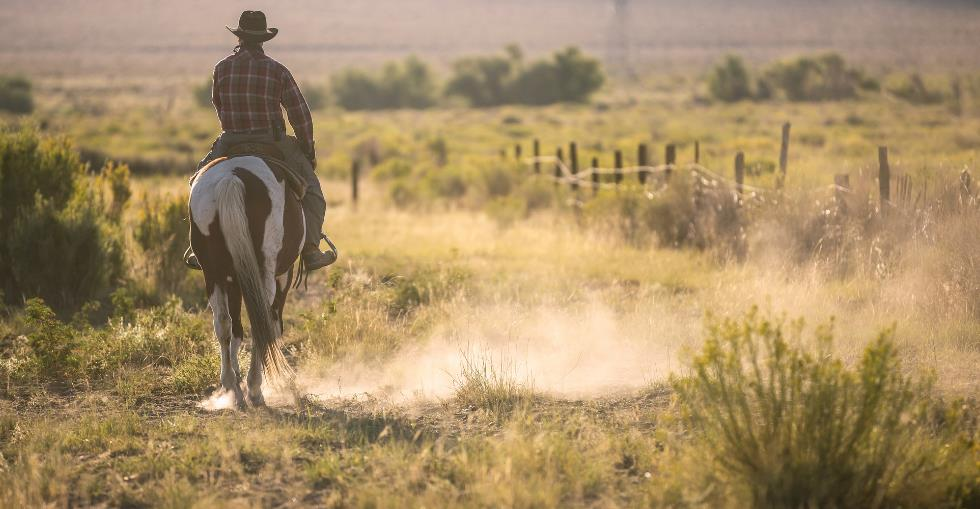 Should I buy a farm or a ranch?
