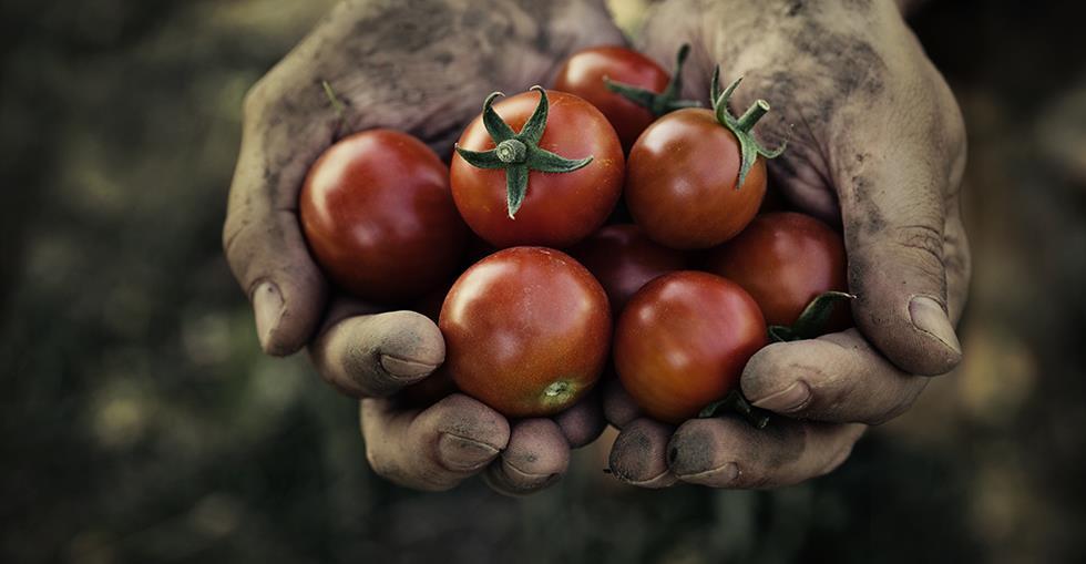 farmtotablehero
