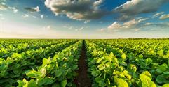 How To Sell an Agricultural Supply Business